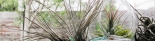 Living Ambiance terrarium and air plants